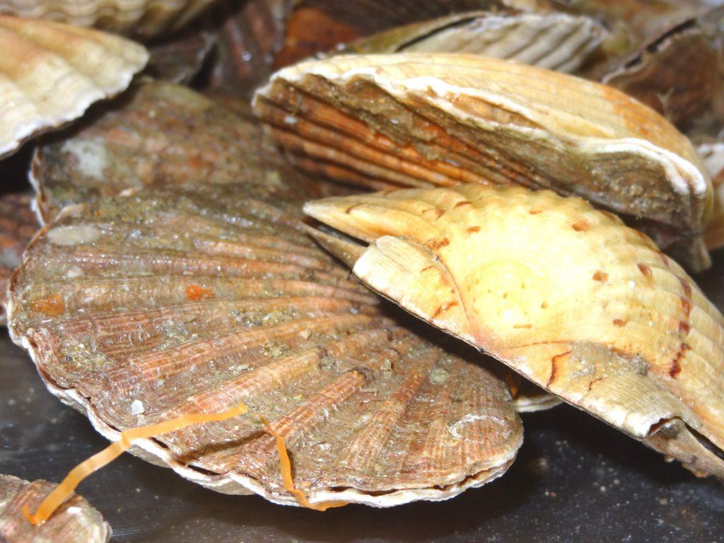 Les poissons de marion